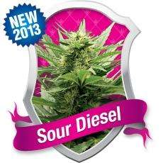 Royal Queen SeedsSour Diesel Feminised Seeds