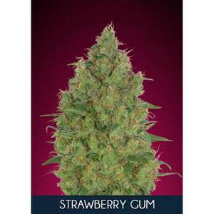 Advanced SeedsStrawberry Gum Feminised Seeds