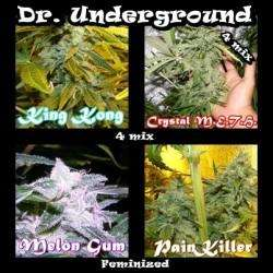 Dr UndergroundSurprise Killer Mix Feminised Seeds