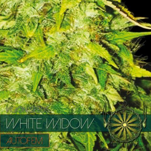 Vision SeedsWhite Widow Auto Feminised Seeds