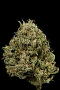 Dinafem Seeds Cheese XXL Auto Feminised cannabis seeds