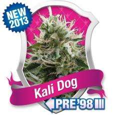 Royal Queen Seeds Kali Dog Feminised cannabis seeds
