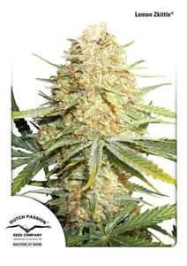 Dutch PassionLemon Zkittle Auto Feminised Seeds