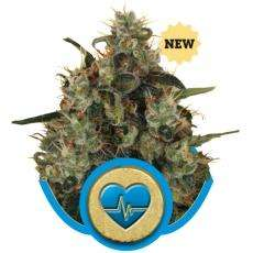 Royal Queen SeedsMedical Mass Feminised Seeds