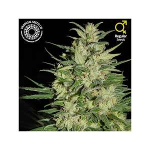 Tropical SeedsNepal Highland Regular Seeds