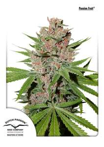 Dutch PassionPassion Fruit Feminised Seeds