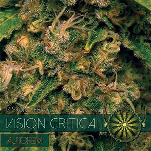 Vision SeedsVision Critical Auto Feminised Seeds