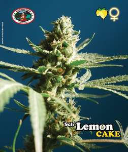 SchLemon Cake Feminised Seeds