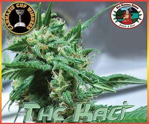 Big Buddha SeedsThe Kali Feminised Seeds