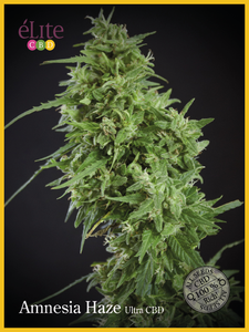 Elite Seeds Amnesia Haze Ultra CBD Feminised cannabis seeds