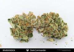 Rare DanknessDank Commander Regular Seeds
