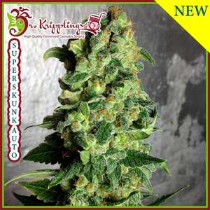Dr Krippling SeedsSuper Skunk Auto Feminised Seeds