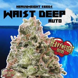 Heavyweight SeedsWaist Deep Auto Feminised Seeds