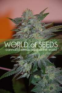 World of SeedsYumbolt 47 Feminised Seeds