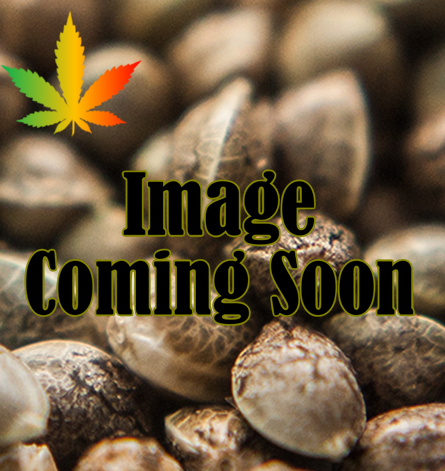 Subcool Seeds/TGA Genetics Afgoo Overdrive Regular cannabis seeds