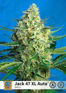 Jack 47 XL Auto Feminised Cannabis Seeds by Sweet Seeds