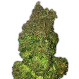 Heavyweight SeedsFruit Punch Auto Feminised Seeds