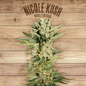 The PlantNicole Kush Feminised Seeds