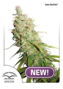 Dutch PassionDesfran Auto Feminised Seeds