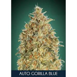 Advanced SeedsGorilla Blue Auto Feminised Seeds