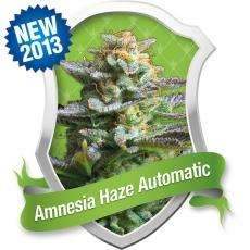 Royal Queen Seeds Amnesia Haze Auto Feminised cannabis seeds