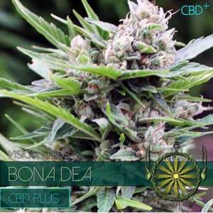 Vision Seeds Bona Dea CDB+ Feminised cannabis seeds
