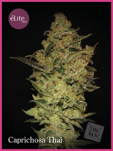 Elite Seeds Caprichosa Thai Feminised cannabis seeds