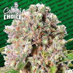 Paradise Seeds Mendocino Skunk Feminised cannabis seeds