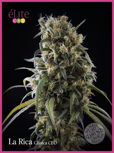 Elite Seeds La Rica Classic CBD Feminised cannabis seeds
