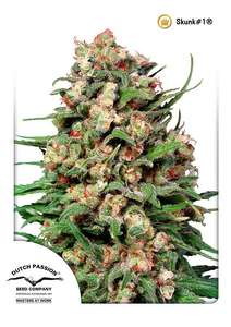 Dutch PassionSkunk #1 Regular Seeds - 10