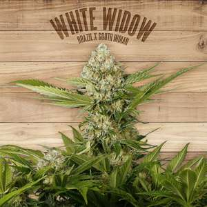 The PlantWhite Widow Feminised Seeds