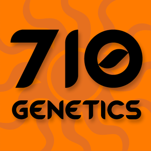 710 Genetics 710 Cheese Feminised cannabis seeds
