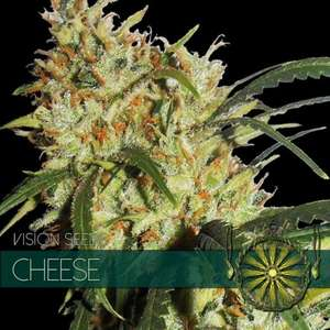 Vision Seeds Cheese Feminised- VS cannabis seeds