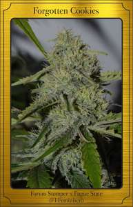 Mephisto Genetics Forgotten Cookies Auto Feminised cannabis seeds