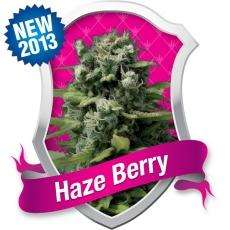 Royal Queen Seeds Haze Berry Feminised cannabis seeds