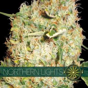 Vision SeedsNorthern Lights Feminised Seeds