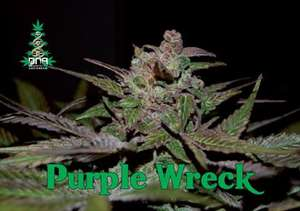 DNA GeneticsPurple Wreck Feminised Seeds - 6