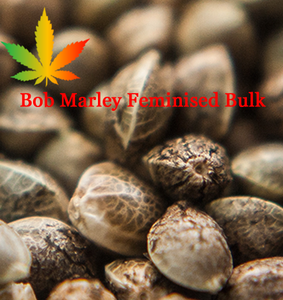 Bob Marley Feminised Cannabis Seeds