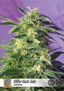 Sweet Seeds Killer Kush Auto Feminised cannabis seeds
