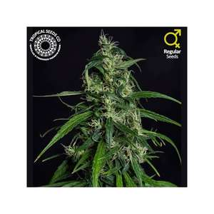 Tropical SeedsOld Afghan NLD Regular Seeds (Limited Edition)