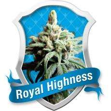 Royal Queen SeedsRoyal Highness Feminised Seeds