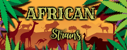 African Strains