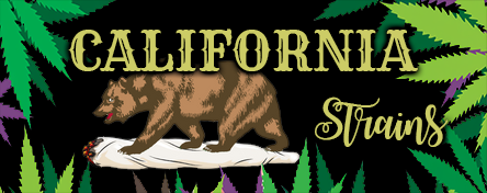 Californian Strains