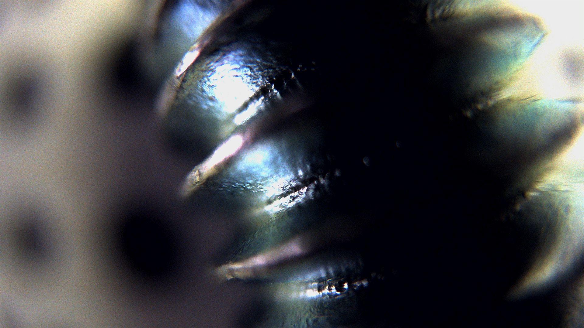 dfk-afux236-m12-svl-ir024524b5m-1mm.jpg