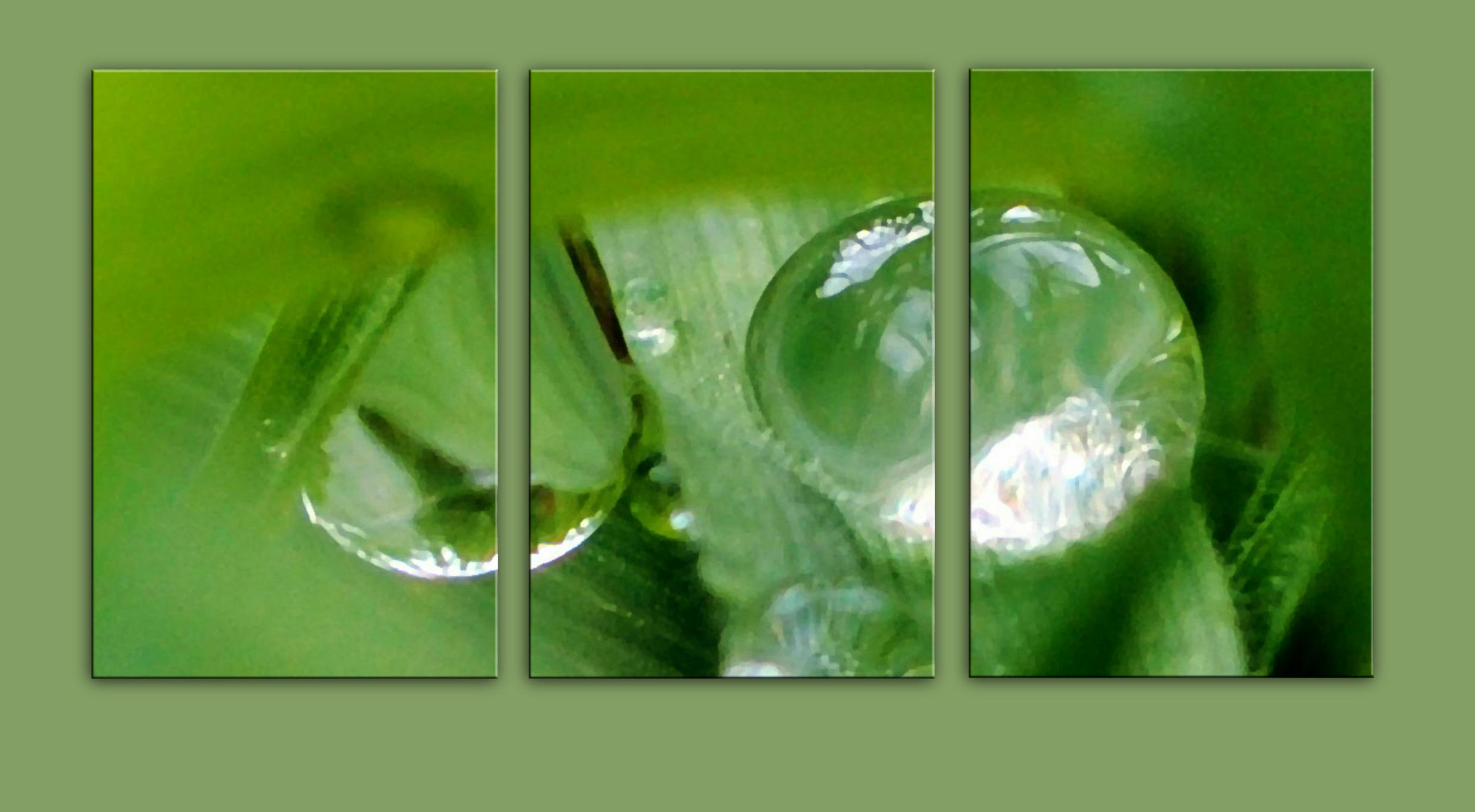 Droplets in a Middleton Garden in green