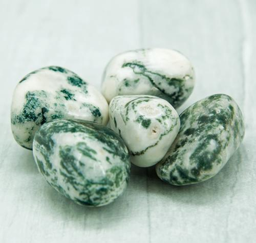 Tree Agate Tumbled