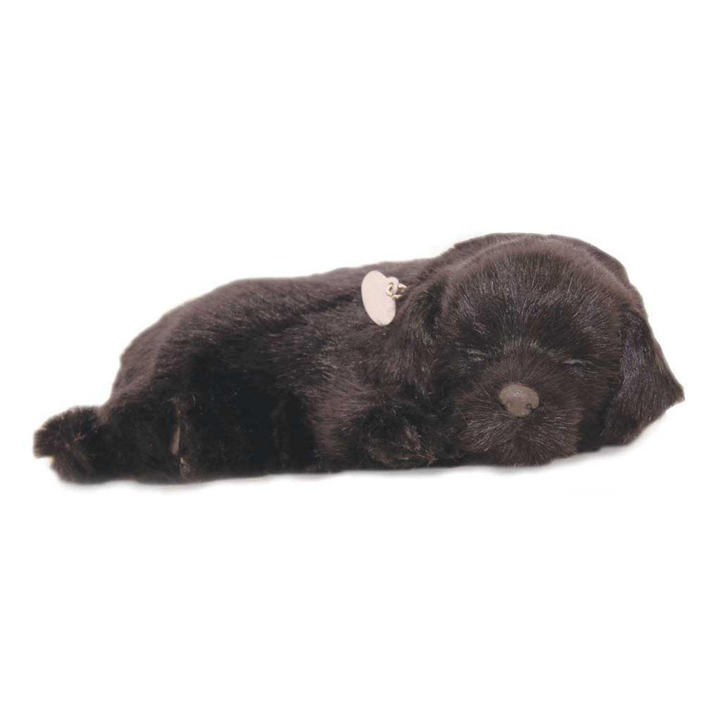 Black Labrador Puppy by Perfect Petzzz