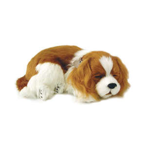 Cavalier King Charles Spaniel Puppy by Perfect Petzzz
