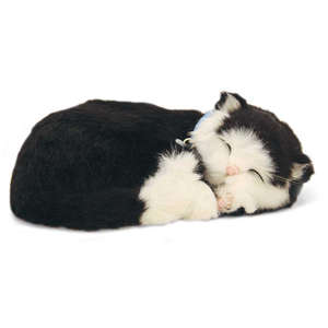Black & White Shorthair Kitten by Perfect Petzzz
