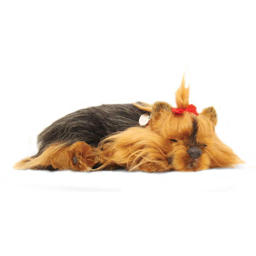 Yorkshire Terrier Puppy by Perfect Petzzz